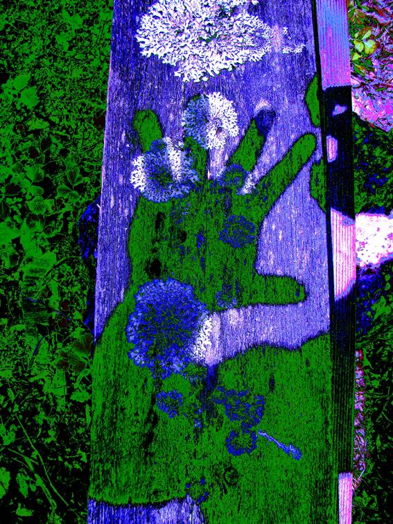 hand-shadow-web
