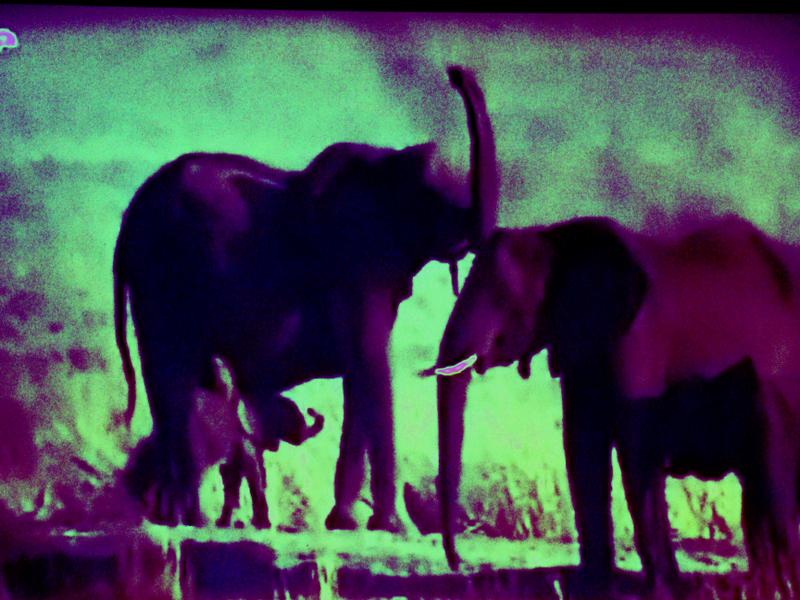 elefants3-kopie