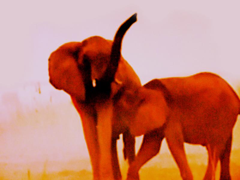 elefants5-kopie