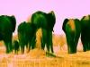 elefants-sand